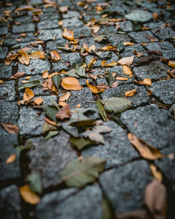 Laying the Pavement Where People Actually Walk: Thoughts on Our Chances of Bringing Scholarship Back to the Heart of Scholarly Communication